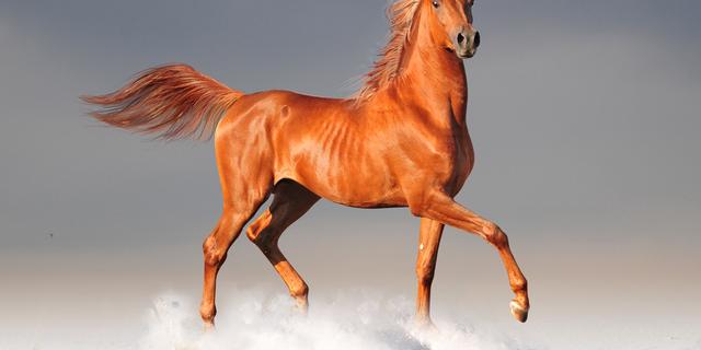 Image du test Quel cheval êtes-vous ?