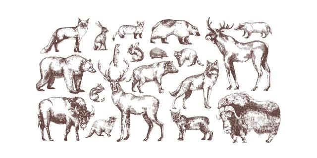 Image du test Quel est votre animal totem ?