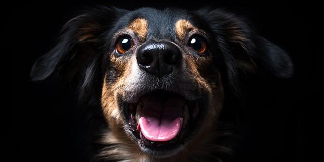 Image du test A quel chien ressemblez-vous ?