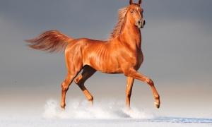 Quel cheval êtes-vous ?