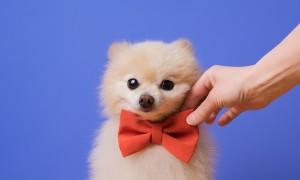 Quel animal mignon êtes-vous ?