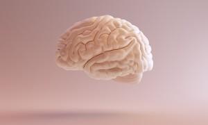 Quel est votre type de développement cérébral ?