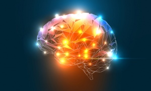 Quel % de votre cerveau utilisez-vous ?