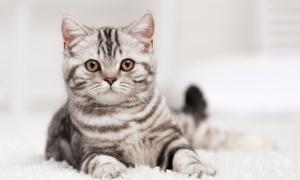 De quel chat êtes-vous la réincarnation ?