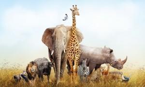 Qui seriez-vous dans le monde animal ?