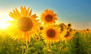 Quelle fleur sauvage êtes-vous ?