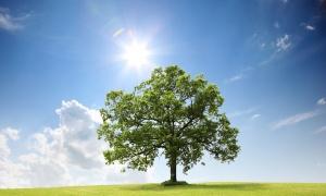Quel arbre vous ressemble ?
