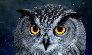 Quel animal nocturne êtes-vous  ?