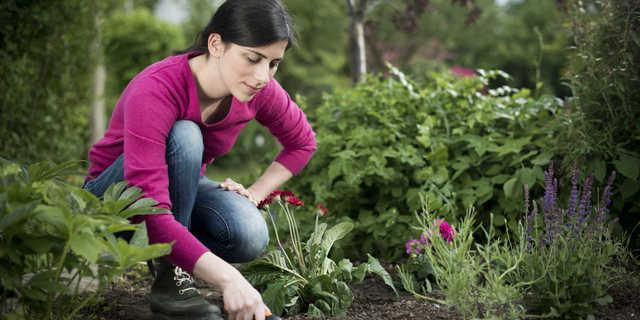 Votre jardin et vous openask - Il faut cultiver son jardin voltaire ...